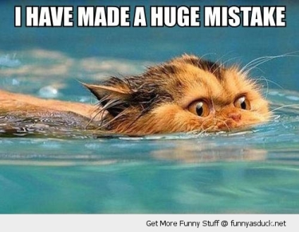 funny-cat-mistake-swimming-water-pics